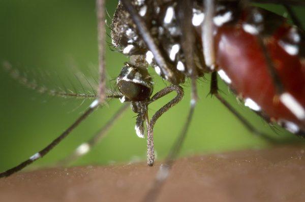 Maladies tropicales